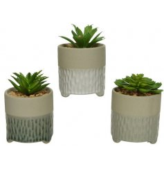 A mix of 3 artificial succulents set within glazed, decorative pots.