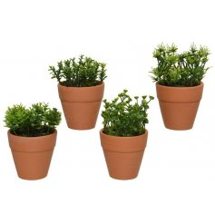 An assortment of 4 fine quality artificial green plants set within terracotta style plant pots.