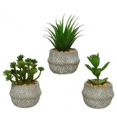 An assortment of 3 artificial succulents set within decorative concrete pots.