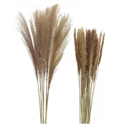 An assortment of 2 pampas grass bundles in natural.