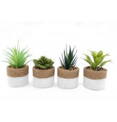 An assortment of varied artificial succulents set within cement pots with two tones and a woven inspired look