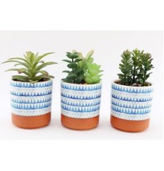 An assortment of artificial succulents, each presented in a charming blue triangle printed pot