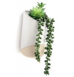 a potted succulent that will be sure to place perfectly on any wall in the home