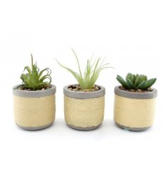 a mix of artificial succulents each placed in a concrete pot with a twine inspired look