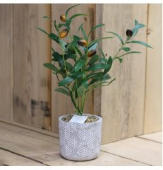 A stylish mix of potted artificial olive tress set within concrete pots with embossed decals
