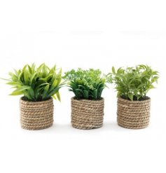 An assortment of potted succulents, each within a twine wrapped pot