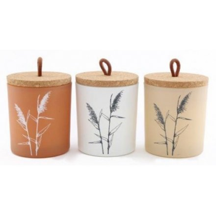 Natural Interior Pampas Candles, 11cm
