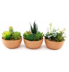 A charmingly simple assortment of potted artificial succulents in natural toned ceramic pots