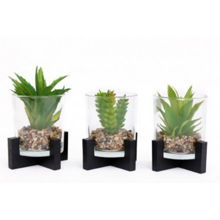 Assorted Potted Contemporary Succulents, 16cm