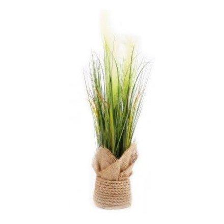 Hessian Pot With Pampas Grass, 65cm