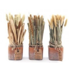 A mix of naturally dried grass bunches set within terracotta pots