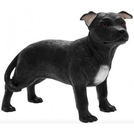 Staffordshire Bull Terrier Black and White, 14cm