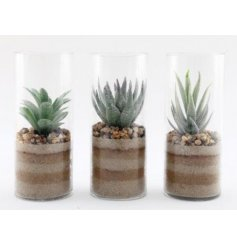 an assortment of glass cylinders each filled with a layered sand decal and potted succulent