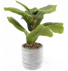 Sure to add a hint of greenery to any home space its placed in, a grey patterned pot filled with a bold artificial fig