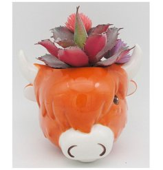 With its cute decal and smooth glaze finish, any potted succulent will look fab in this highland cow themed planter