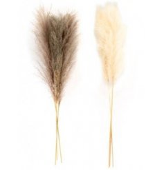An assortment of neutral toned pampas stems with a wide foliage spread