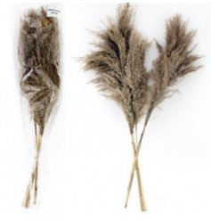 A chic assortment of Natural Pampas Reeds in soft brown and beige hues