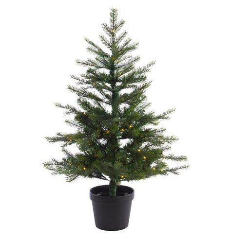 A fabulous full festive potted grandis tree,  perfect for dressing with your own accessories. Suitable for outdoor use o