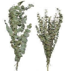 Natural Dried Green Foliage