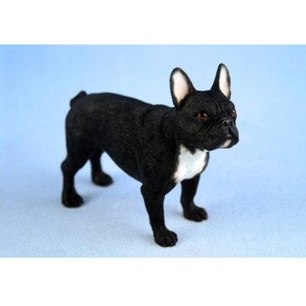 Black French Bulldog Leonardo