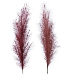 Pampas is the in trend grass to have in your vases, jugs and adornments.