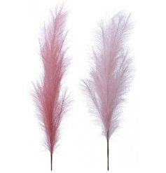Pampas is the in trend grass to have in your vases, jugs and accessories within your house,  garden or porch.