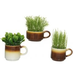 Assortment Of 3 Types Of Herb In Mugs