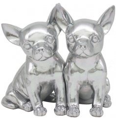 Cuddling Chihuahuas to sweeten up your living room or kitchen