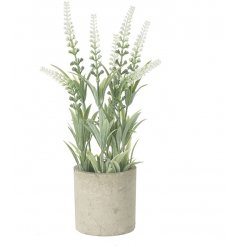 A beautiful Tall Potted Plant in Netural
