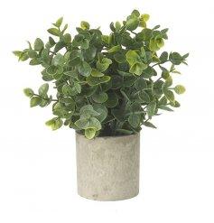 Faux eucalyptus plant in a simple stoneware effect pot.