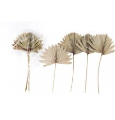 A Charming Set of Four Palm Spears in Natural Design