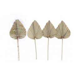 A Boho Styled Set of 3 Palm Spears in Natural