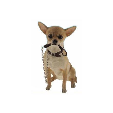 Sitting Walkies Chihuahua