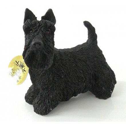 Scottish Terrier Dog Small