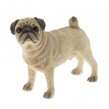 Pug Dog Standing (Small)